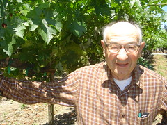 dad_in_grapes
