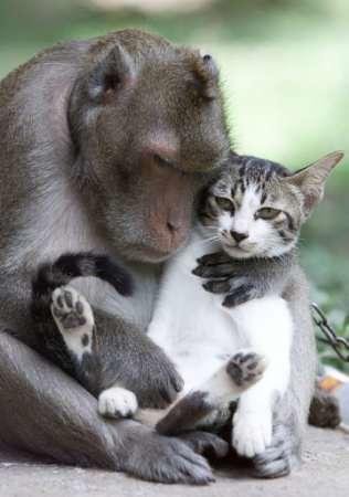 Monkey with cat   by Salim Virji