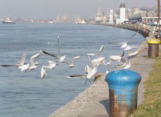 Hitchcock aan de Schelde, Antwerp
