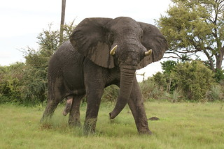 Mad Elephant | by justin