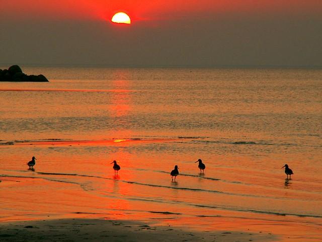 Swedish sunset  7