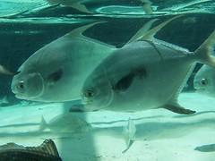 Tampa Aquarium 9-13-07 | by kthypryn