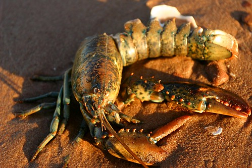 Lobster Nap | by Martin Cathrae