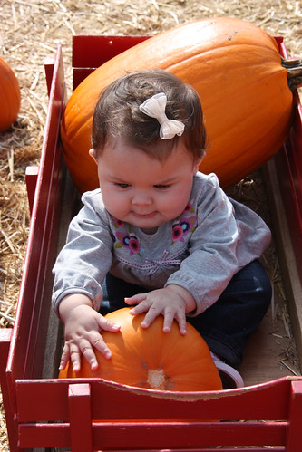 grab that pumpkin | by The Spohrs Are Multiplying...