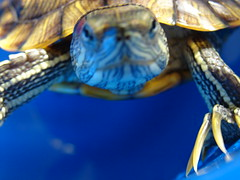 Turtle Sees You
