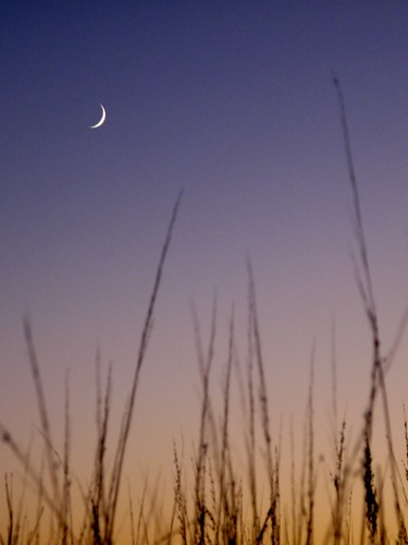 Crescent and grass | by drdrang