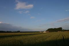 Fields   by kuemmi