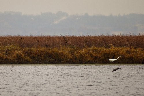 Birds of the Marsh | by CJ Schmit