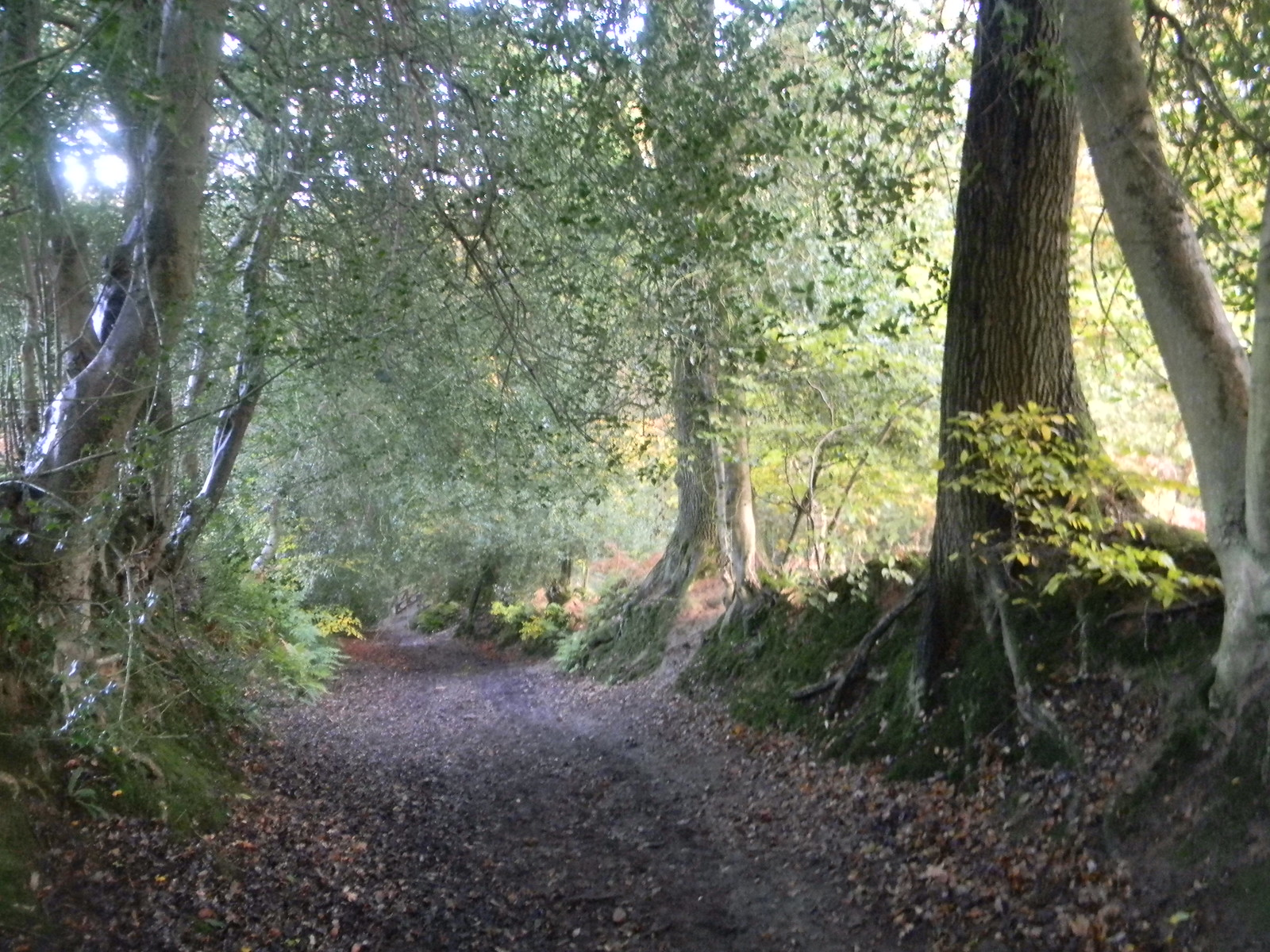 Autumnal bridleway Milford to Haslemere