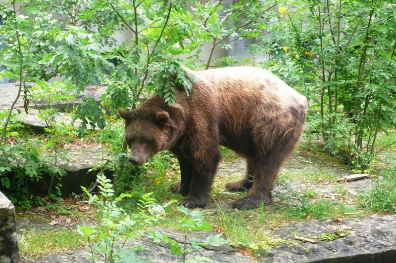 Bear Pit, Bern