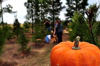 Huntin Pumpkins