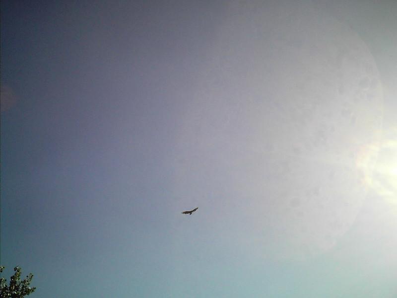 Sun, Sky, Bird