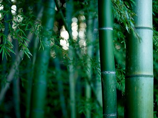 Bamboo thicket | by Joi
