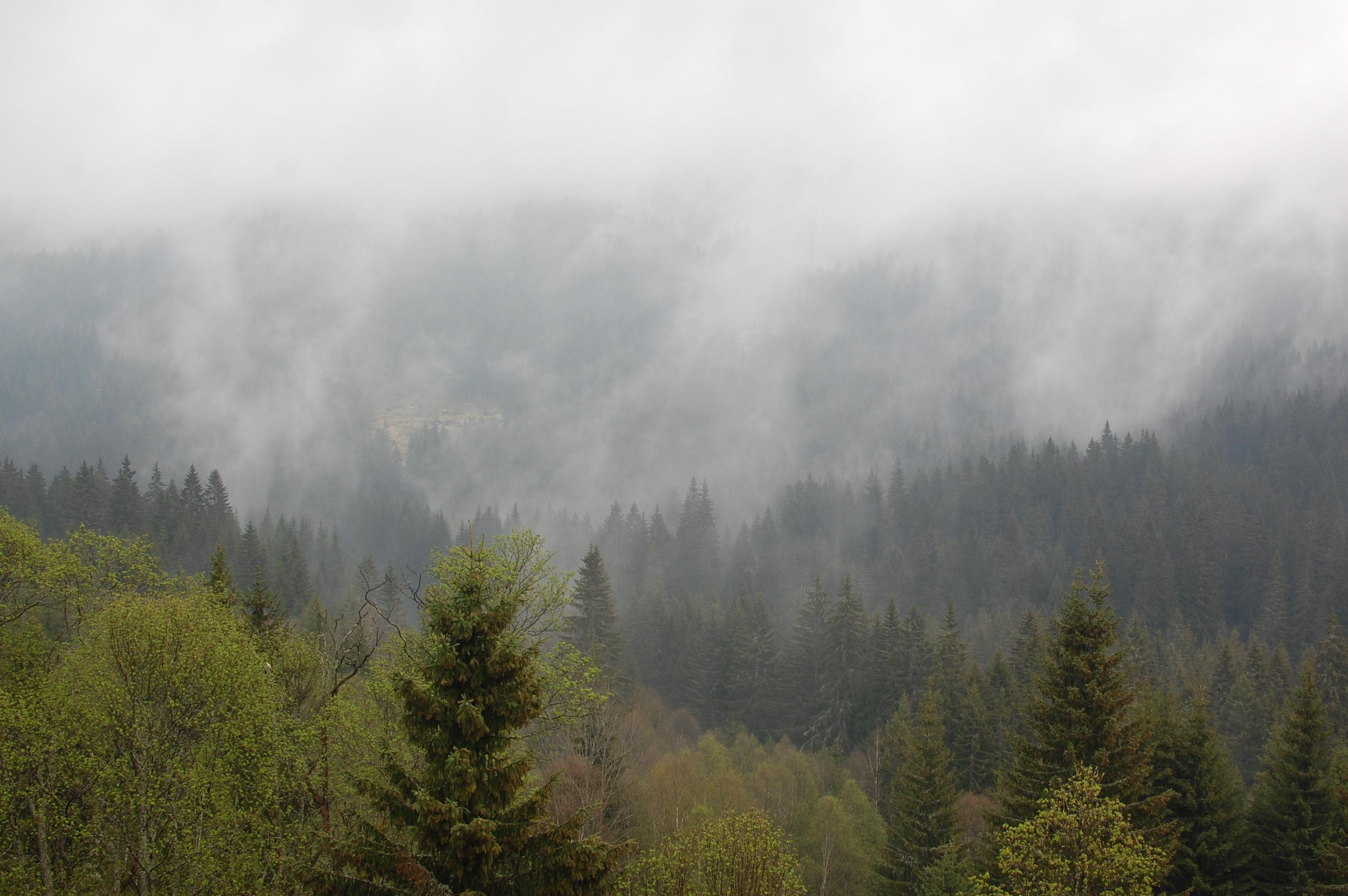 Mlha u Modravy