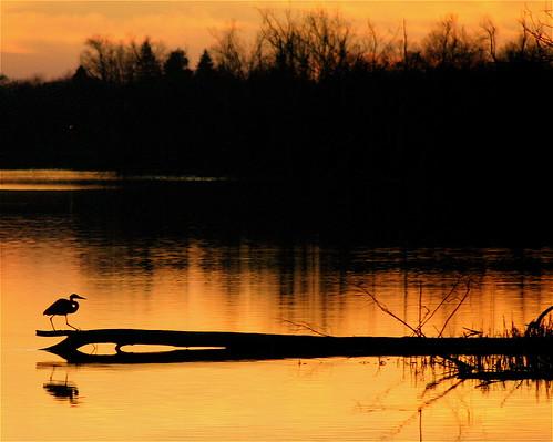 trees sunset sky sun sunlight lake bird heron water clouds reflections evening twilight pond december 5 kentucky waterbird lexingtonky richmondroad waterfowl greatblueheron fayettecounty naturesfinest centralkentucky anawesomeshot ellserlielake