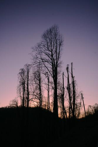blue trees sky landscape vines north scenic ridge carolina escarpment lobata pueraria