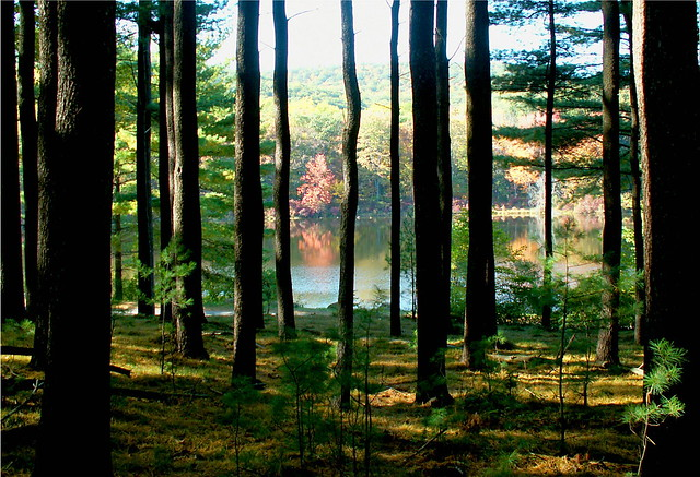 Pond in Tree jail