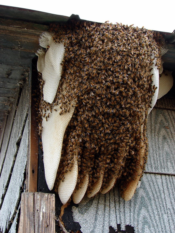 Natural Beehive