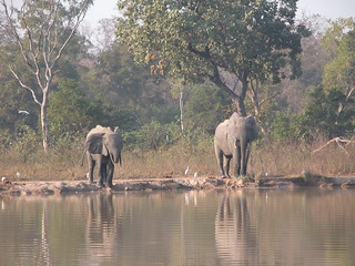 Elephants at watering hole Ghana   by Hexagoneye Photography
