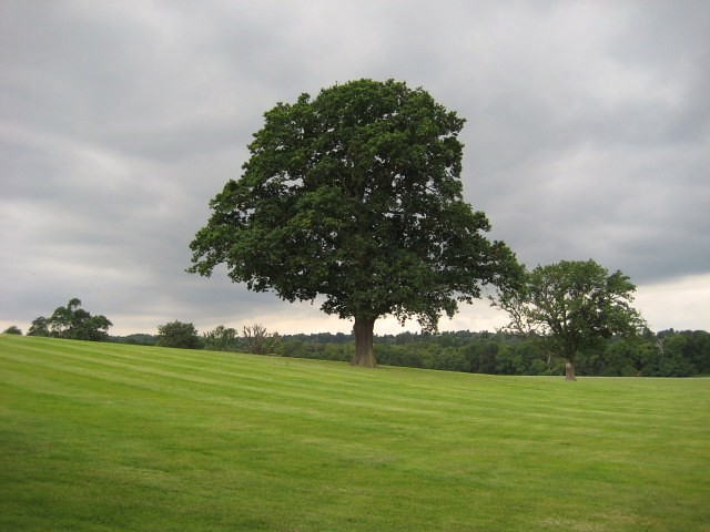 Tree Sunningdale to Windsor