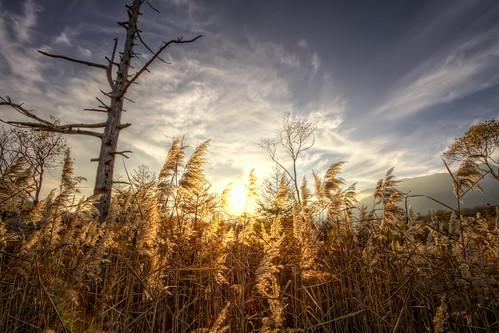 sunset sky sun grass japan clouds canon eos scenic 7d nikko hdr marshland tochigi senjogahara 3xp
