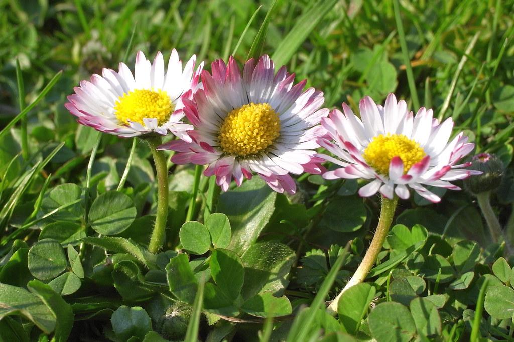 Trzy kwiaty / Three flowers