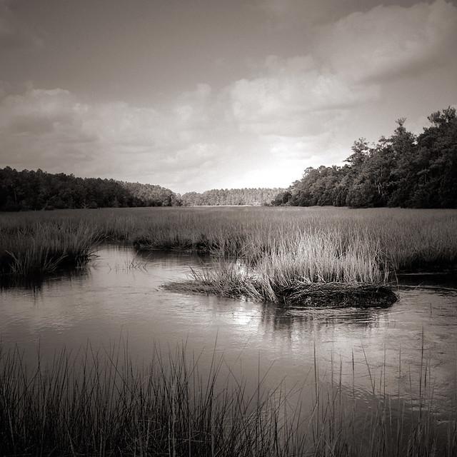 Tidal Creek 1