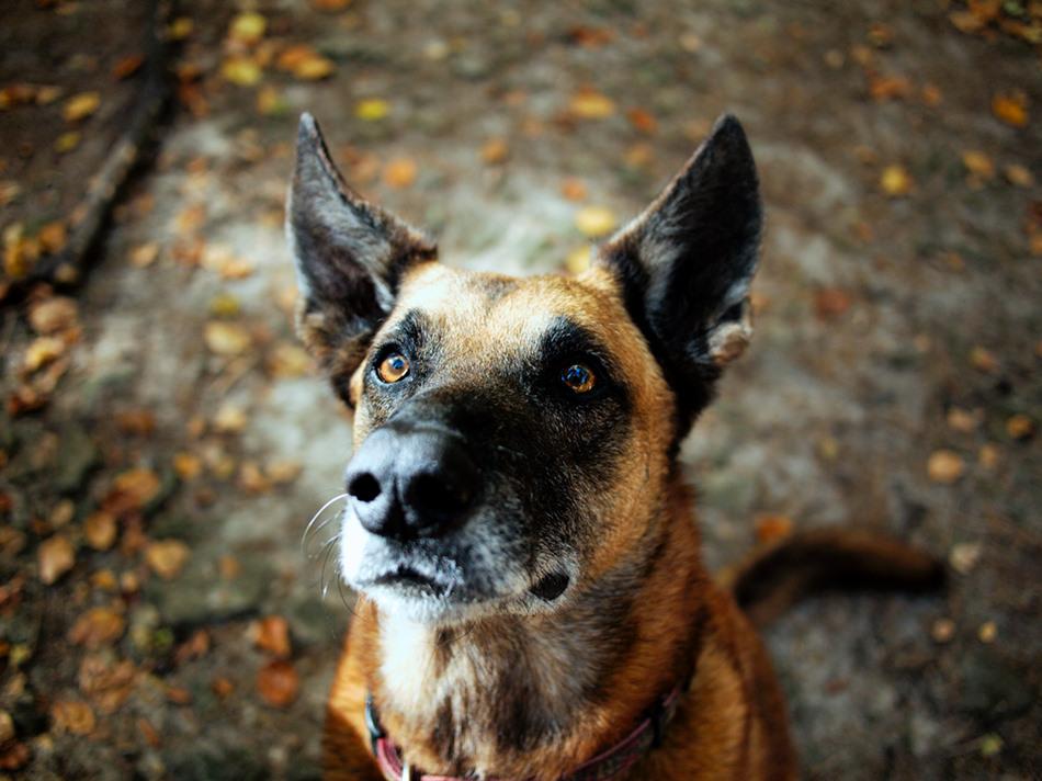 ustawa wsparciu psów zakończeniu służby