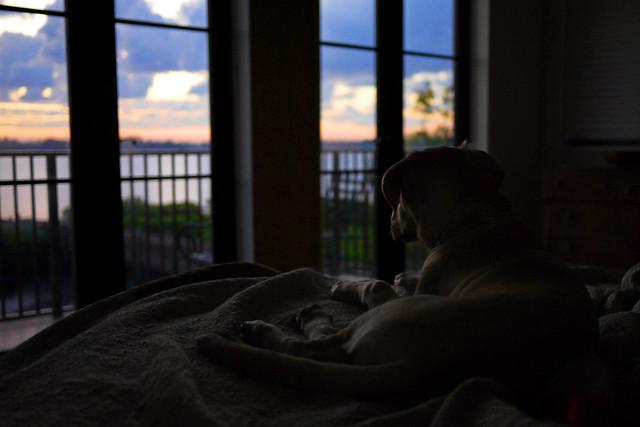 Dawn Watch