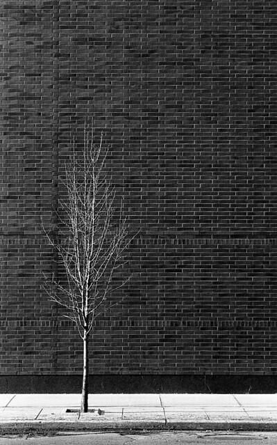 Tree and Brick