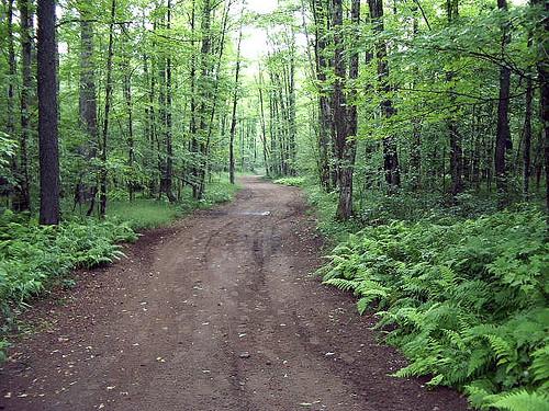 NY Woods Road 7.06
