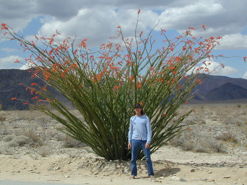 Leslie @ Ocotillo in Bloom