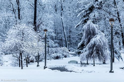 canonef135mmf2lusm canoneos6d ny newyork samanthadecker saratogasprings skidmorecollege snow tree upstate winter unitedstates