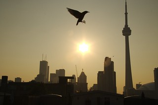 Toronto at 7am | by DuckTroll