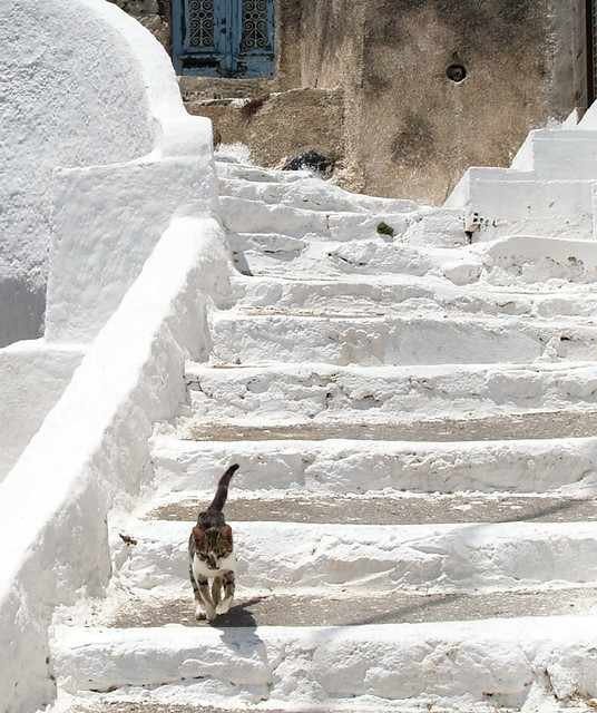 Cat on Stairs, Thirassia, Greece