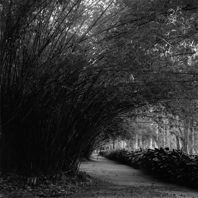 Bamboo Alley again