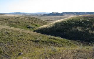 Shortgrass Prairie 2
