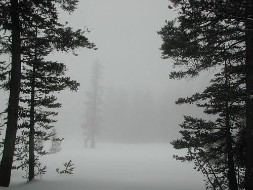 Foggy Meadows w/ Snow