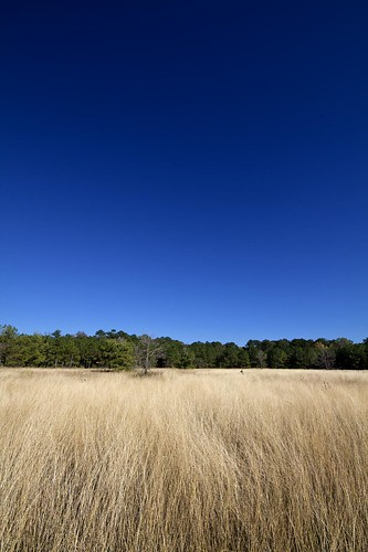 blue sky texas meadow wideangle deer buck kingwood eastendpark sigma1020mm 10mm canon7d