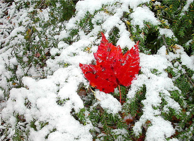 Early snow in Fall