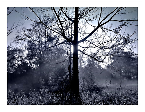 morning tree fog sunrise rouge louisiana baton