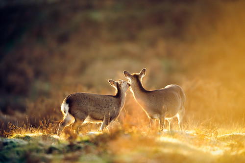 lighting morning autumn trees light england sun mist nature misty fog fairytale forest sunrise golden countryside kent woods nikon frost bokeh wildlife calm deer ethereal flare wonderland storybook magical f28 enchanted d3 400mm