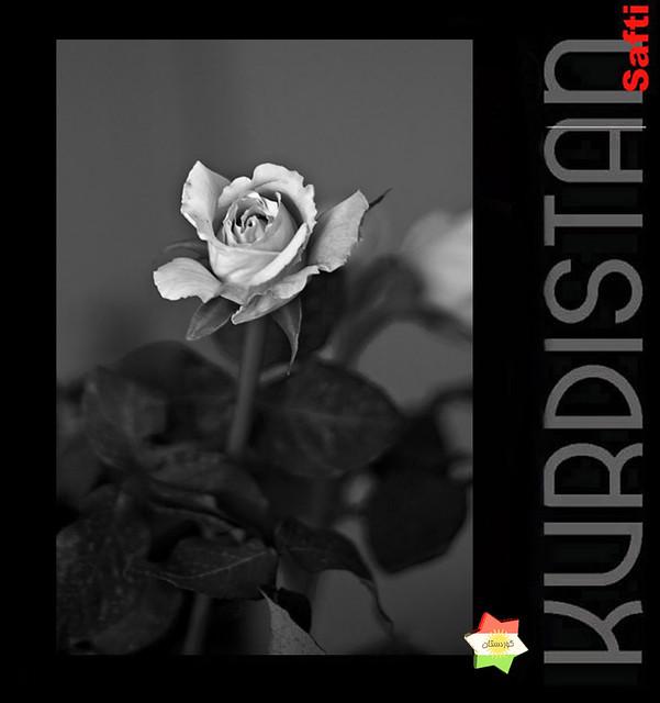 kurdistan     خۆشم دەوێی
