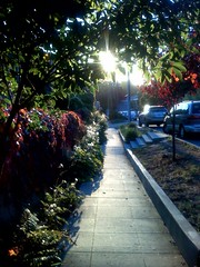 Another beautiful street (yawn) | by scriptingnews