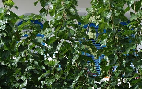 Ierapetra -  Gruen auf Blau und Weiss