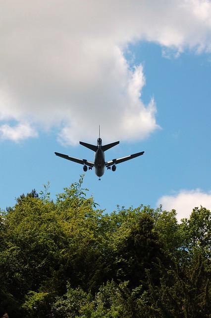 Plane trees?