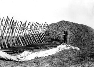 Cowpea and Beggarweed hay being stacked
