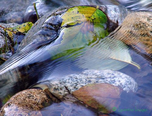 canada nature water river bc arms britishcolumbia salmon vivid spawning mapleridge mothernature breathtaking sockeye gvrd sonydsch1 beautifulbritishcolumbia specnature alouetteriver fineartphotos supernaturalbritishcolumbia keepexploring impressedbeauty bctourism britishcolumbiatourism wowiekazowie britishcolumbiatravel jeffl2007 alouetterivermanagementsociety sockeyesalmonreturn mapleridgetourism ©lavertonimages britishcolumbiavacation bcweather mapleridgeviews travelingbritishcolumbia