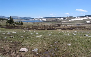 Alpine Tundra 2