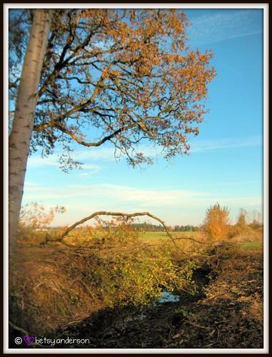 autumn trees fall rural landscape farm farmland picnik